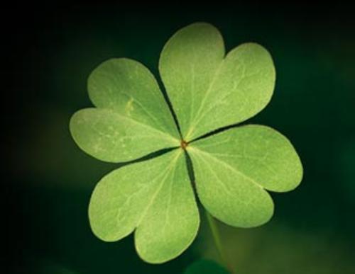 trebol-de-4-hojas