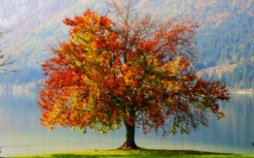autumn_tree_1920