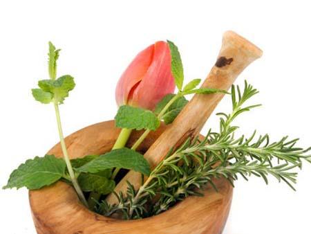plantasmedicinales01