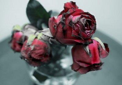 rosasmarchitas