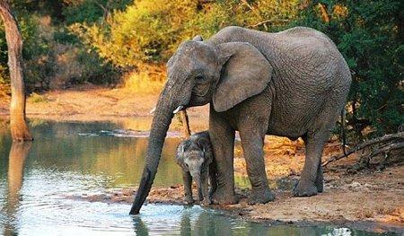 Qu significa soar con elefantes  Soy Esotrica