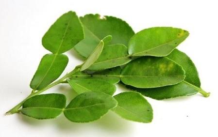 hojas-frescas